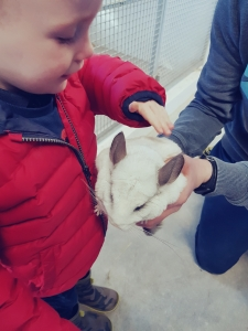 Little Boy Petting a Chinchilla at Mellon Fun Farm