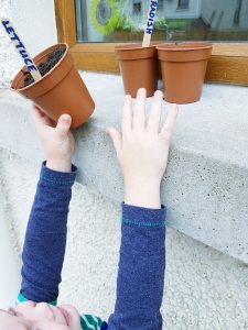 Hands of boy placing plant pot on the window sill